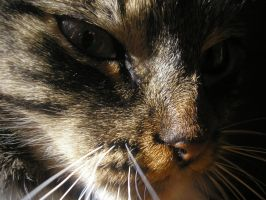 A picture of my cat by Aistecool