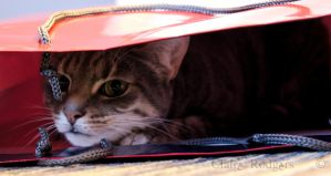 cat in a bag :) by MaliskaRodgers
