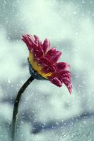 snow flower by NaViGa7or