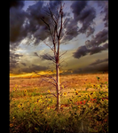 Dead Tree by he-cries-elusive