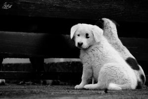 Sad puppy by Gibbich