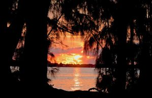 EC Palm Sillouette Framed Sunrise by Kippenwolf