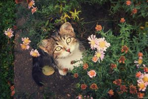 In the flowers by ZoranPhoto