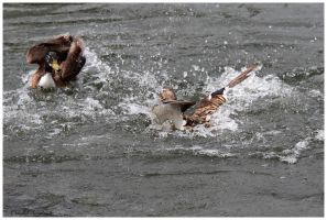 Duck Battle by Claudia008