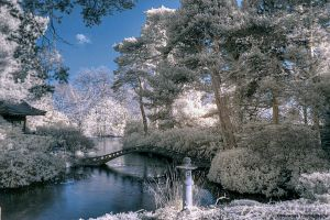 IR Tatton Park 6 HDR 2 by Okavanga