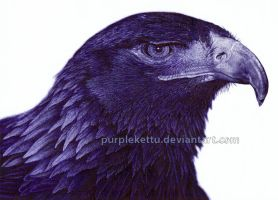 Eagle (ballpoint pen) by PurpleKettu