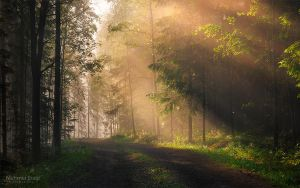 Morning in Forest by m-eralp