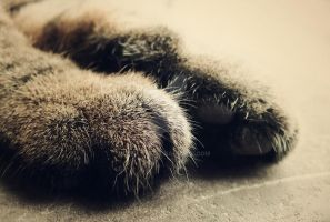 Paws by Lylly55