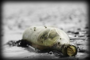 Washed up Bottle by Drummyralf