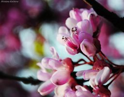 :Spring is in the Air: by drop-of-imagination