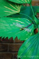 Plasticine Garden - Dragonfly2 by lonesomeaesthetic