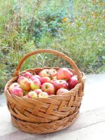 Apple basket by paolica