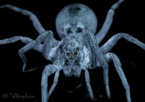 Creepy Crawly by Talkingdrum