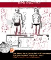 Anatomy 101  porportion Voice over tutorial pack by sakimichan
