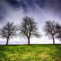 three trees by maticgolob
