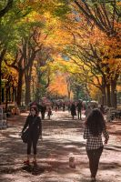 Central Park, NYC by Recalibration