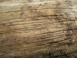 Woody Texture II by KW-stock