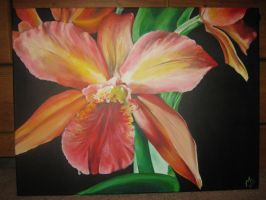 Orange Orchid by yessica83