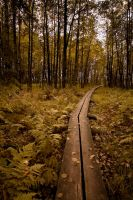 A Path to Fall by 1uno