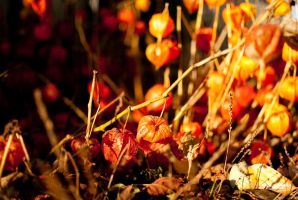 The fireworks of autum 3 by macgl