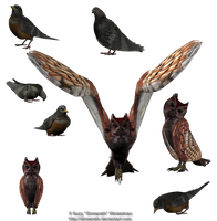 Misc Birds png stock 4 by Direwrath
