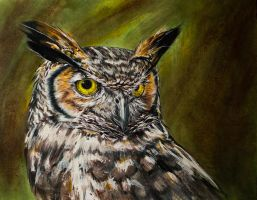 Great Horned Owl by dfbovey