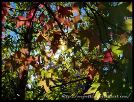 Colors of Fall by MoPotter