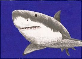 Day 17: Great White Shark ACEO by whitetippedwaves