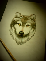 Wolf's Head by kirstynoelledavies