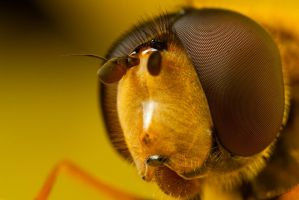 Hover Portrait at x4 by Alliec