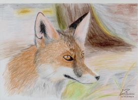Fox Portrait by Woodswallow