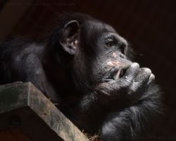The Thinker by dranrebesor