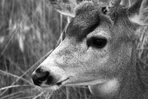 Black and White Deer by XxQuothTheRavenxX