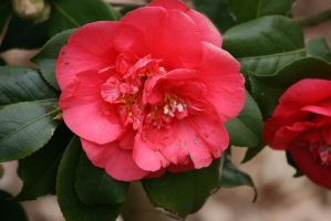 view to camellia 5 by ingeline-art