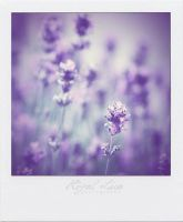 Purple summer by rigallise