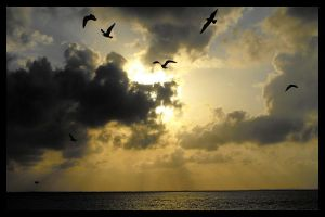 Gulls in Silhouette by SalemCat
