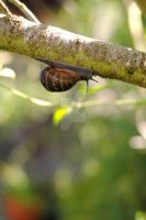 Snails Pace by MaePhotography2010