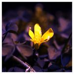 Flower by ironicna
