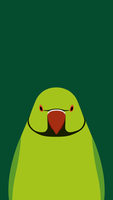 Rose-ringed Parakeet - bird wallpaper for iPhone by birnimal