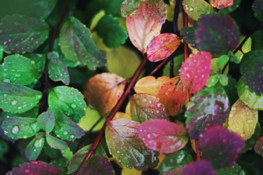 Autumn colours by betweenthebookpages