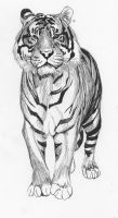 Tiger 4 by african-artist