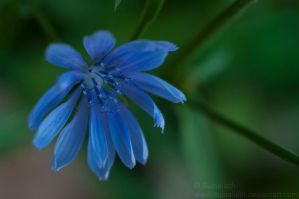 Nature Blue by Suinaliath