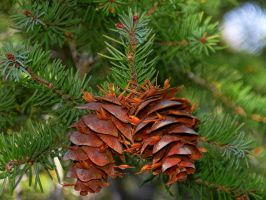 Pine cone berries by greenunderground