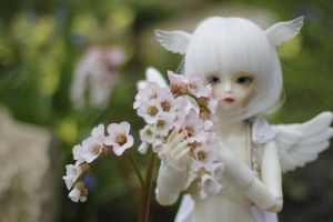 Soom Shale - flowers and wings by Kuroi-Sora