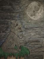 Wolf looking  to the moon by Lyricsloveandbooks