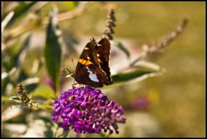August Butterflies 2011 - 03 by ryangallagherart