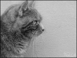 His Best Profile - Pan 10 by Feral-Cats