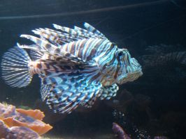 Lionfish by FearBeforeValor