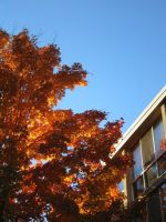Autumn in Oneonta -2- by puresonicfury