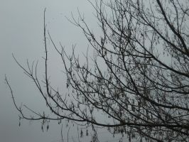 Bare Branches Stock 1 by Orangen-Stock